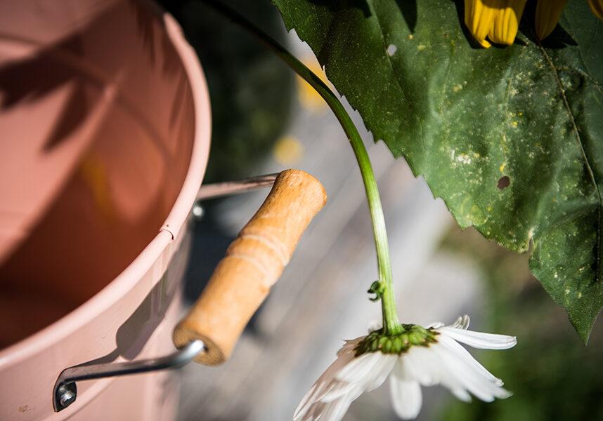 Hoisenhuette Blume